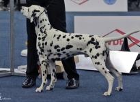 International Dog Show in Dortmund - Germany