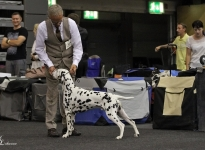 11. National Dog Show in Erfurt - Germany