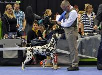 Internationale Rassehunde Ausstellung in Chemnitz