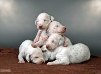 Photo Impressions of 2nd week Christi ORMOND X - Litter