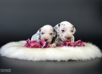 Photo Impressions of 3rd week Christi ORMOND X - Litter