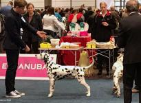 National Dog Show in Karlsruhe - Germany