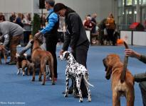 Martini Dog Show CACIB in Groningen - Holland