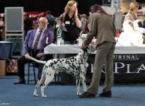 Bundessiegerausstellung in Tulln - Österreich