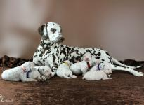 Photo Impressions of 2nd week Christi ORMOND S - Litter