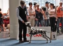 VDH Annual Trophy Show in Hannover - Germany