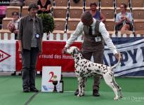 Internationale Rassehunde Ausstellung in Neumünster