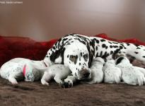 Photo and Video Impressions of 2nd week Christi ORMOND N - Litter