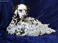 Photo and Video Impressions of 3rd week Christi ORMOND N - Litter