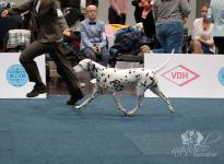 International Dog Show in Karlsruhe - Germany