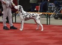 Martini Dog Show in Groningen - Netherland