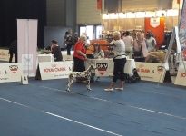 International Dog Show in Innsbruck - Austria