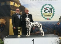 International Dog Show in Graz- Austria