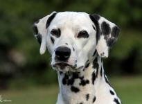 New stud dog Christi ORMOND Raise me Up