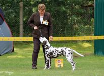 All Breeds Dog Show in Strausberg - Germany