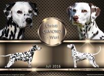 Christi ORMOND P - Wurf