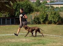 Fotoimpressionen 13. Dog Handling Seminar Premium