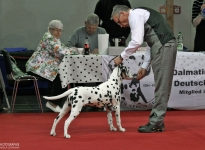 Special Breed Dogs Show in Magdeburg - Germany