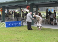 AKC Dog Show in Ocala - America