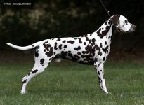 Stud dog Christi ORMOND Highly Diamond Fuji