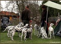 Kommunikationsverhalten zwischen Hunden