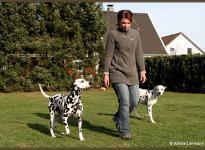 Einsatz von Hilfsmitteln zur Führung der Hunde
