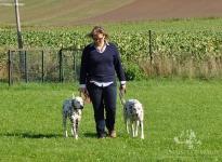 Leinenführung mit verschiedenen Leinen und Techniken - Fixierung zwischen Mensch und Hund