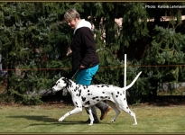 In pass-passages to control the dog and lead in the right trot speed