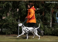 Leading the dog at the same speed at the trot correctly is not always an easy task