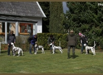Comply exercises in the show ring, spacing & placing of dogs