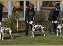Prominent placing the dog in the show ring at the correct distance