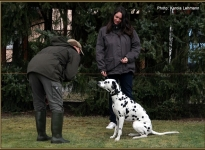 Individual training of participants, proper Motivate the dogs