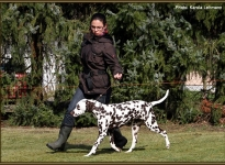 The dog lead so when running, that a sufficient distance from the dog handler is present, so that curves or triangles can be run successfully