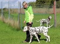 Führung und Korrektur des Hundes beim Vorbeigehen an Gartenzäunen