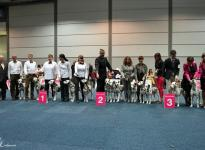Präsentation der Christi ORMOND Zuchtgruppe auf der World Dog Show in Leipzig