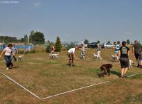 Übungen im Ausstellungsring, Abstände einhalten & Aufstellen der Hunde, mit Videoaufzeichnung