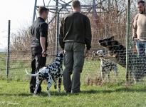 Einzelausbildung - Führung und Korrektur des Hundes beim Vorbeigehen an Gartenzäunen