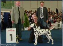 Präsentation des Rüden Chapman vom Teutoburger Wald Bundessiegerschau Dortmund 2007 - Ehrenring