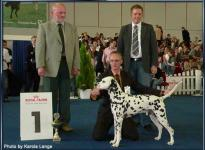 Presentation of male Chapman vom Teutoburger Wald Federal Winner Show Dortmund 2007 - Ring of Honor