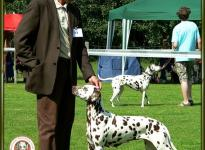 Presentation of female Mochaccino Dalmatian Dream Regional Show Münster 2007 - Champion Class