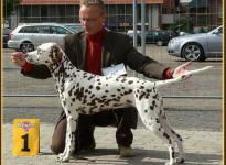 Presentation of female Latoya vom Teutoburger Wald National Show Cloppenburg 2007 - Champion Class