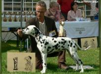 Presentation of the female Cara Mia Carina aus dem Leopoldstal Regional Show Adendorf 2007 - Puppy class