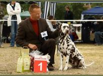 Presentation of male Christi ORMOND Coppola International Show Neumünster 2009 - Champion Class