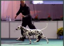 Presentation of female Quality Queen vom Teutoburger Wald World Dog Show in Bratislava - Slovakia 2009 - Ring of Honor