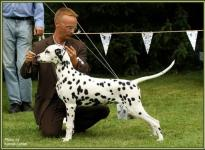 Presentation of male Spotnik`s First Farao For Ormond Regional Show Buren 2009 - Puppy Class