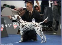 Presentation of female Latoya vom Teutoburger Wald Centenary Winner Show Wels / Austria 2009 - Champion Class