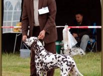 Presentation of male Christi ORMOND Fascination Feeling Regional Show in Schwegen 2010 - Puppy Class