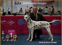 Präsentation des Rüden Christi ORMOND Exacting Empire VDH Jahrhundertsieger Ausstellung in Dortmund 2011 - Championklasse