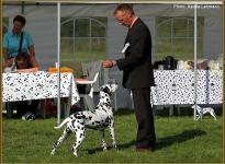 Präsentation der Hündin Nabuka vom Teutoburger Wald Regional Ausstellung in Leopoldstal 2011 - Championklasse