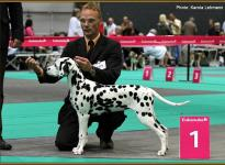 Presentation of female Obonya `s Pride Anna-Ariella Euro Dog Show in Holland 2011 - Baby Class